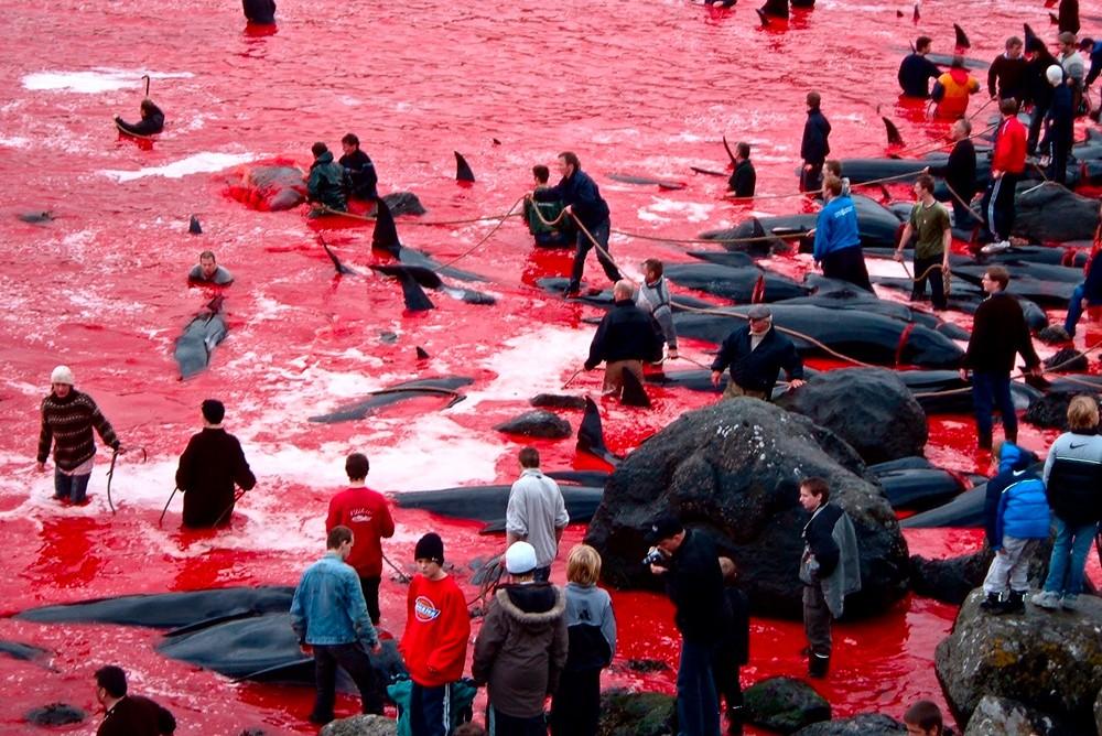 дания убийство дельфинов